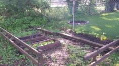 """The """"back"""" garden (lettuce, broccoli, beans)"""