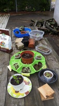 Seedlings having some time outside