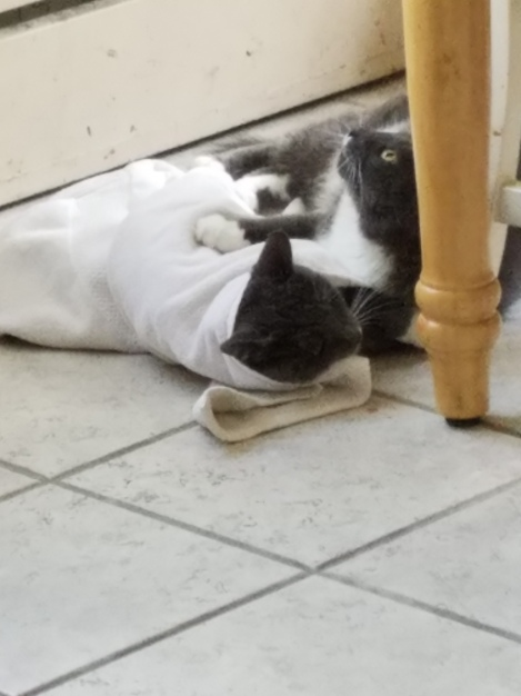 Penn and Teller Towel